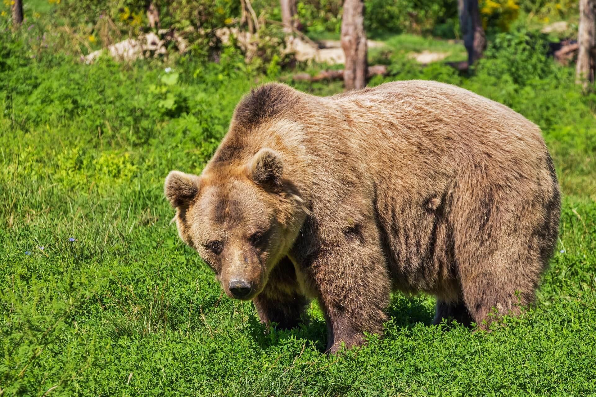 Vertel Britse functionarissen dat de Canadese berenslachtpartijen moeten stoppen