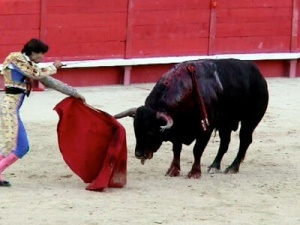 400-bullfight