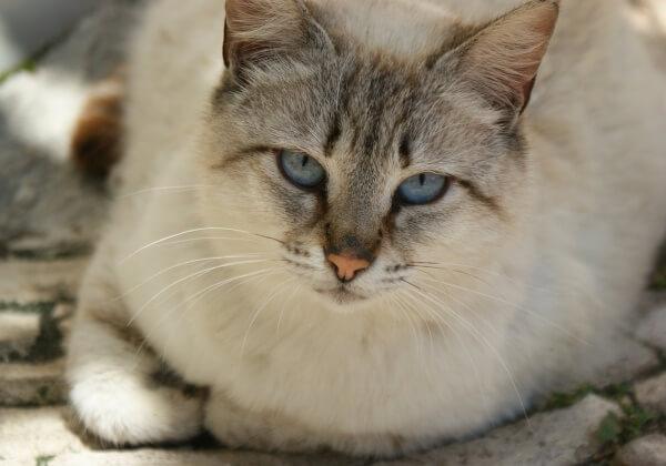 cat-114815_1280