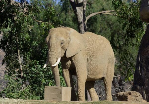 elephant-1176562_1280