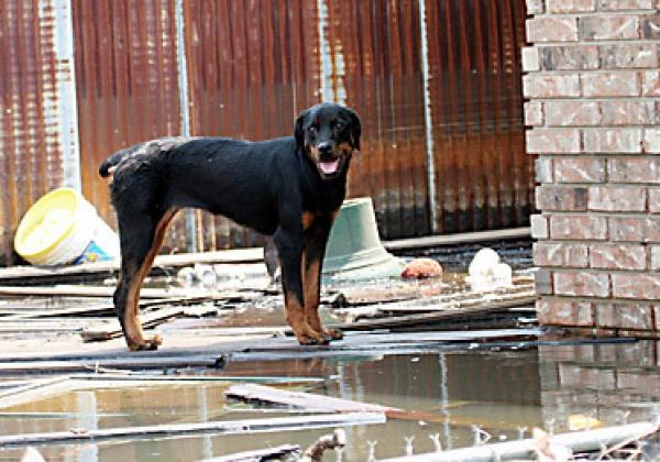 Bent u op rampen voorbereid? U kunt dieren helpen voordat de ramp toeslaat