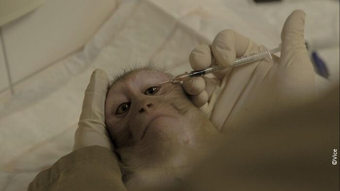 Help apen te redden van wrede experimenten in Rijswijk