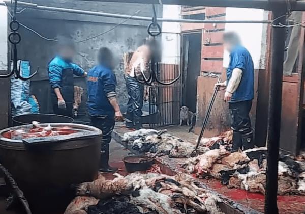 Honden neergeknuppeld en gedood in leerindustrie
