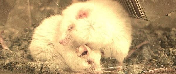 Help mee voorkombare chemische experimenten op dieren in de EU te stoppen