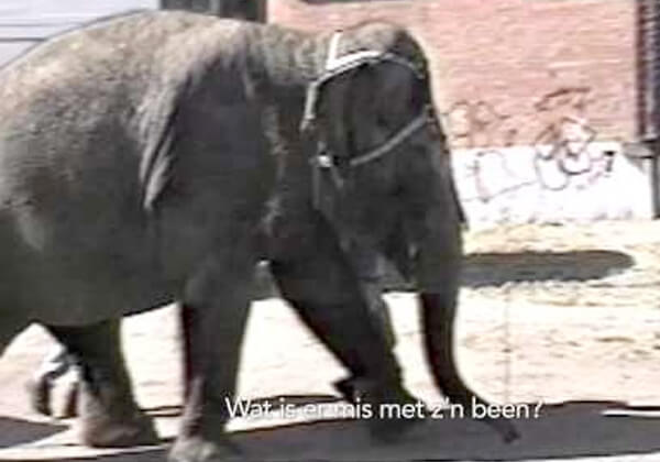Beloof nooit naar een circus met wilde dieren te gaan