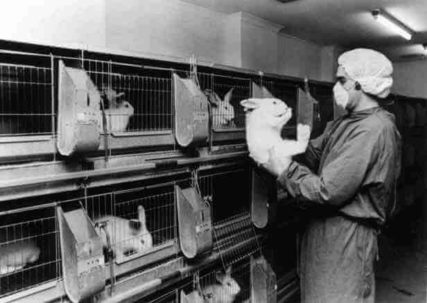 De Europese regulatie voor Chemicaliën is verantwoordelijk voor dodelijke dierproeven – maar jij kunt ons helpen dit te veranderen