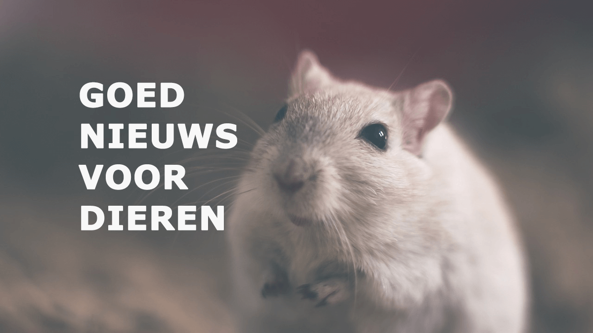 Nederland neemt een GIGANTISCHE stap voor dierenrechten!