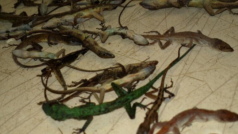 Dead reptiles- dode reptielen-One-770x433