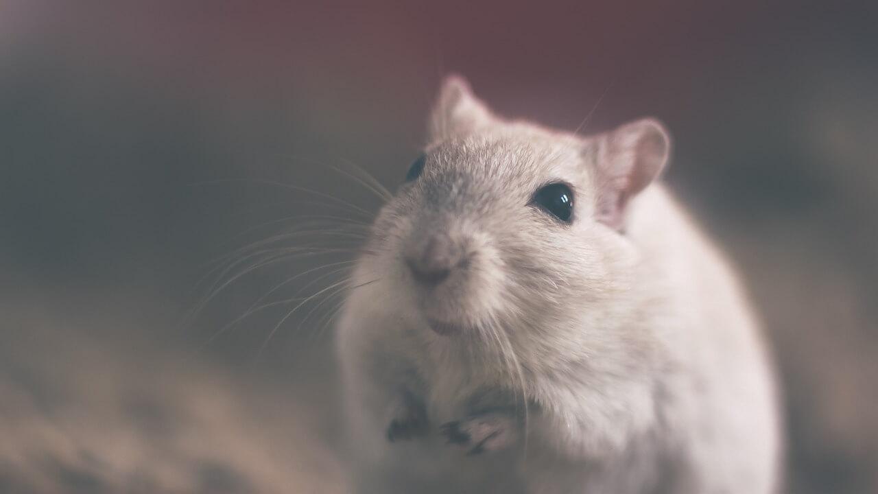 Goed nieuws! Zwitserland kondigt aan de verkoop van op dieren geteste cosmetica te stoppen