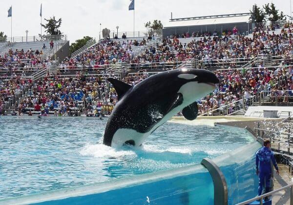 orca-523067_1280