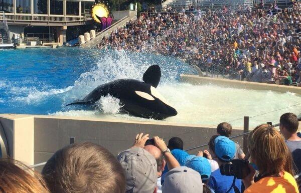 SeaWorld-orca-and-crowd_mini-770x385