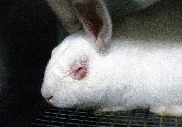 Europese Ombudsman lanceert onderzoek naar dierproeven voor cosmetica