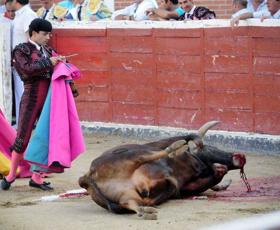 We AnimalsBullfighting