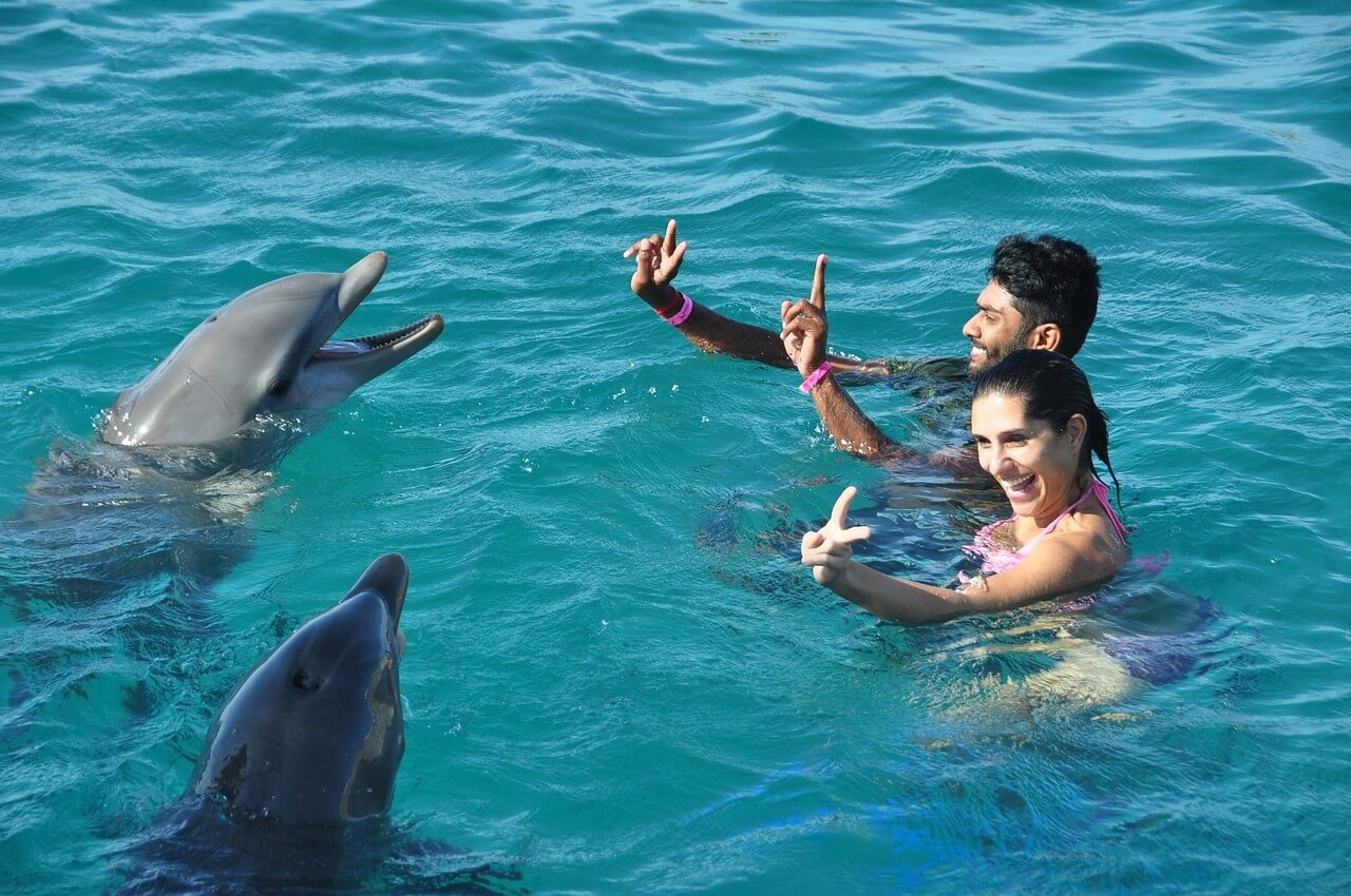 dolphins-1161173_1280