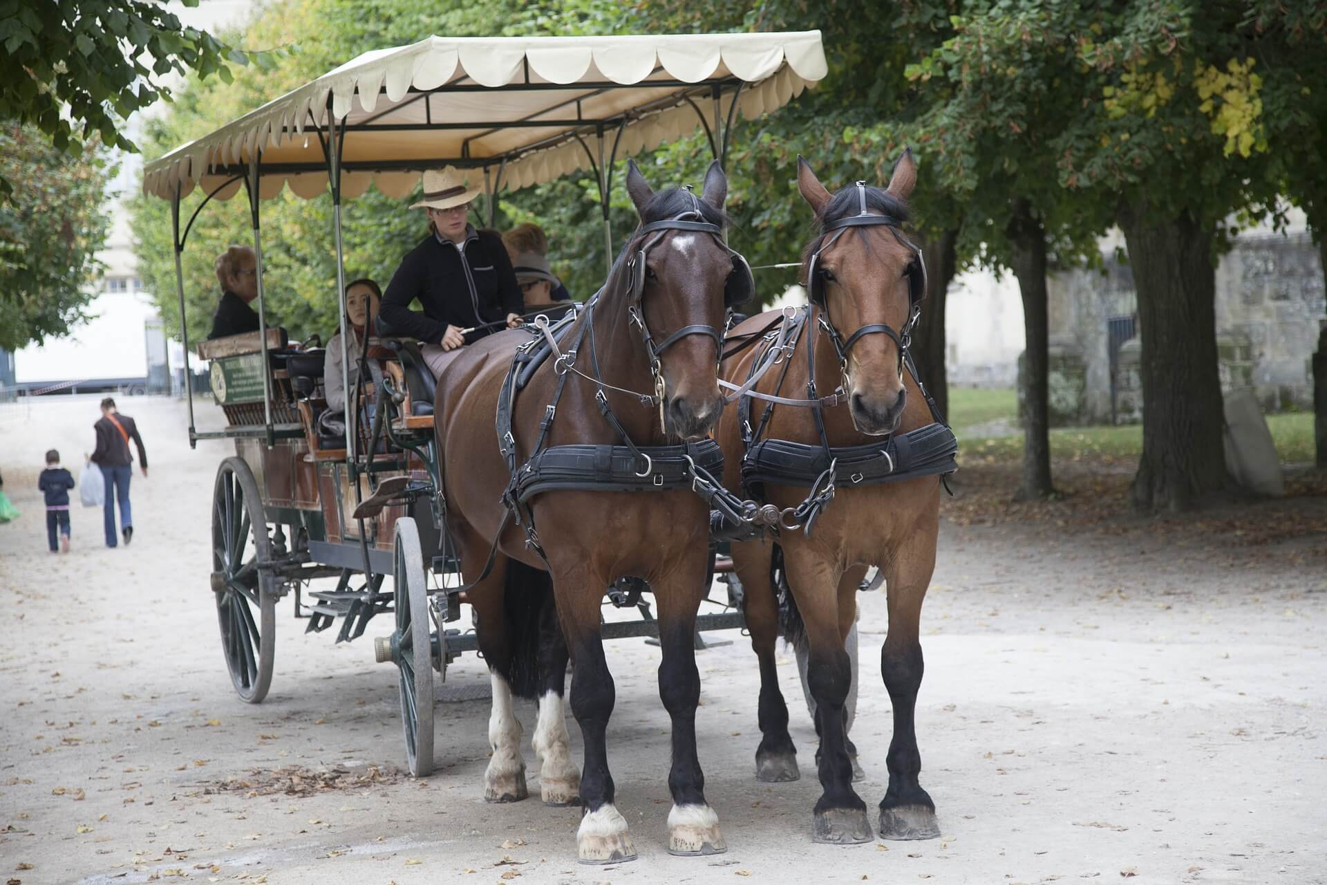 fontainebleau-726780_1920