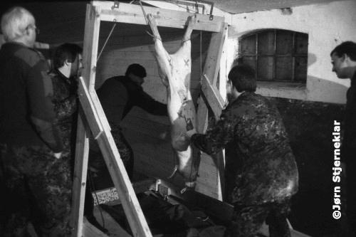 Soldaten hangen een levend varken op en markeren hem with doelwitten