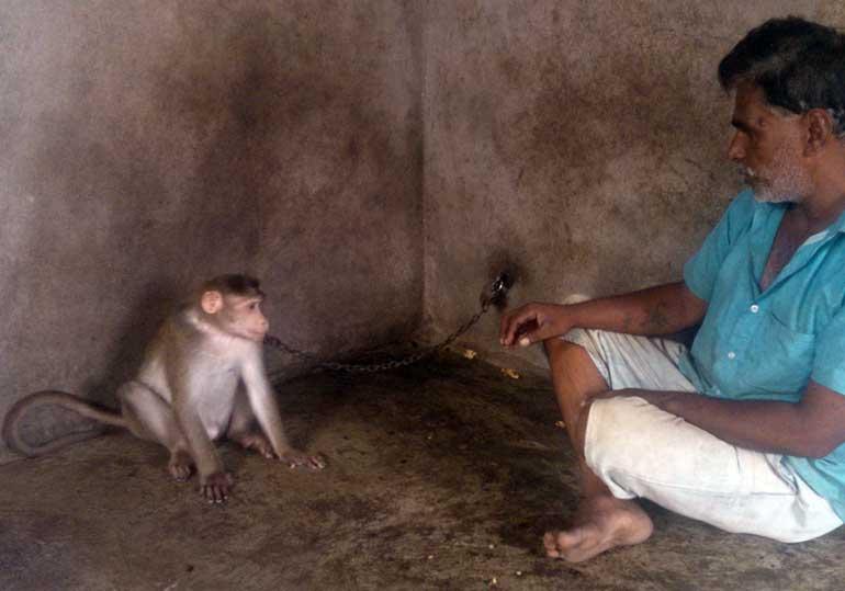 Animal-Rahat-Monkey