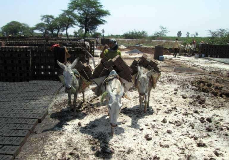 Animals-in-India-Donkeys-at-Brick-Kiln