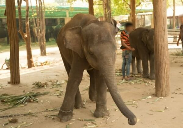Deze CGI-olifant laat zien hoe overbodig het is om dieren uit te buiten in films
