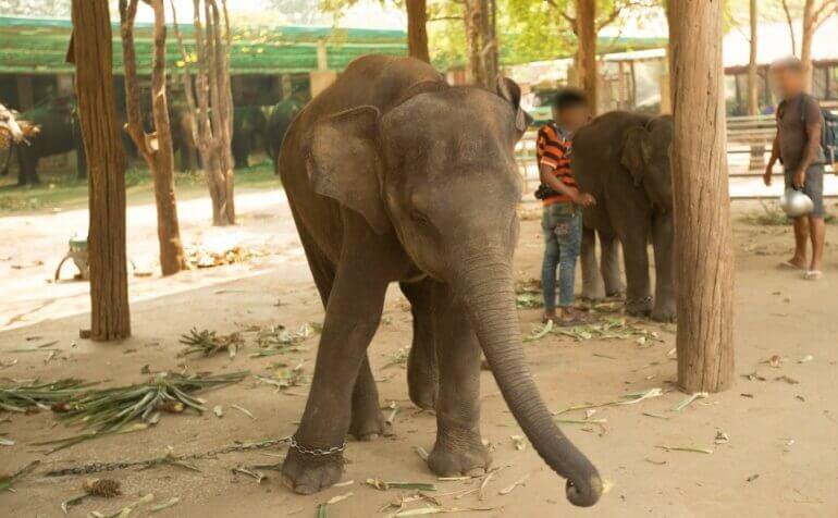 Elephant-chains-Thailand-770x476