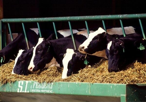 Waarom iedereen zich aan zou moeten sluiten bij de campagne voor dierenrechten