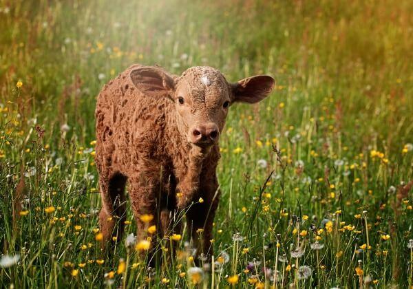 Wij zoeken een PETA Netherlands Membership Coordinator