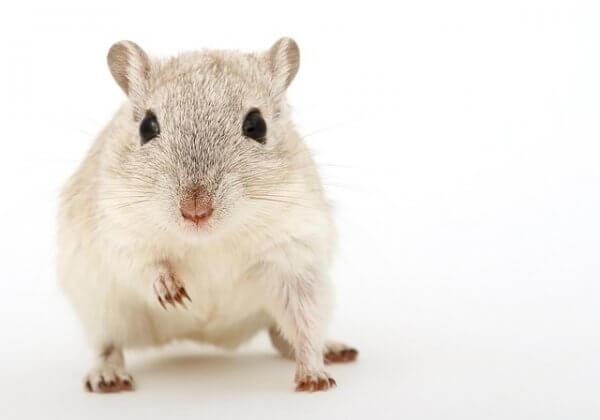 Het werk van PETA US om dierproeven te beëindigen kan prestigieuze award winnen