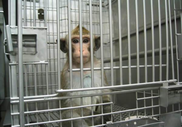 Vraag de Europese Unie om experimenten op primaten te beëindigen