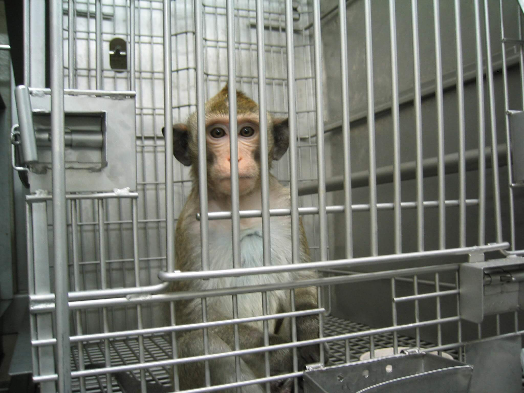 monkey sitting in cage, looking out