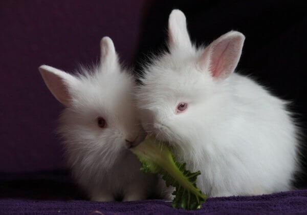 Overwinning voor dieren: Suitsupply en Van Gils besluiten geen bont of angora te gebruiken