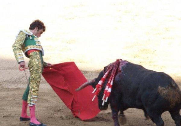 Een grote stap terug: ban op stierengevechten in Catalonië afgewezen