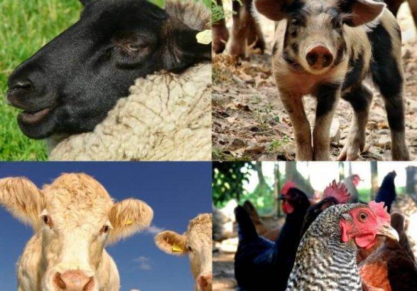 5 redenen om veganist te worden gedurende Wereld Vegan Maand