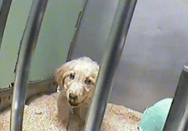 Spoor Franse stichting aan om te stoppen met wrede experimenten op honden!
