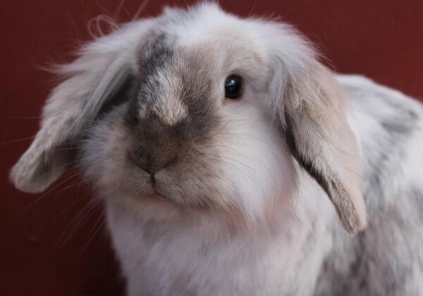 Update: China keurt eerste proef voor cosmetica zonder gebruik van dieren goed