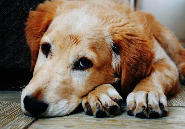 5 redenen om nooit een puppy of kitten cadeau te geven voor kerst