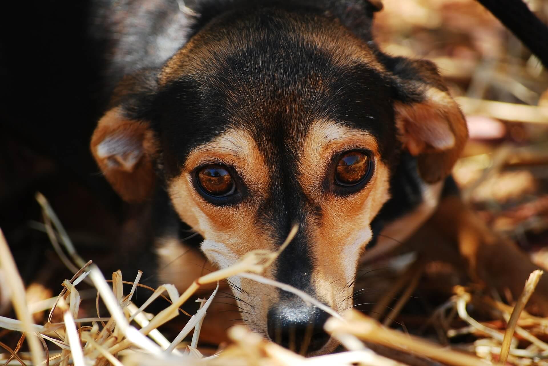 honden adoptie kerst PETA