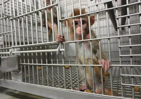 Verzoek Europa om een moratorium van dierproeven te steunen