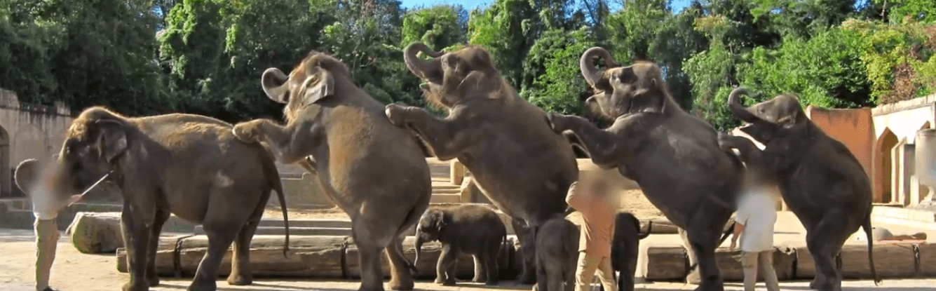 PETA Duitsland onthult enorme wreedheid tegen olifanten in een Duitse dierentuin