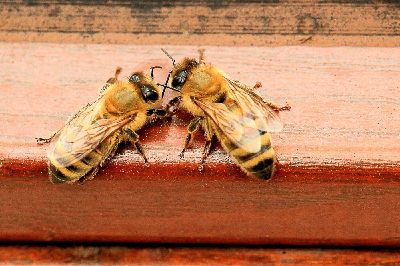 Waarom het niet okee is om honing, koninklijke gelei en bijenpollen te eten
