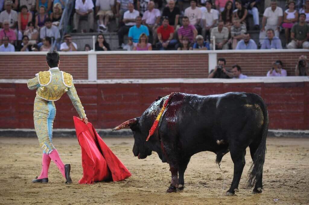 De dood van Spaanse matador is verder bewijs dat stierenvechten moeten worden verbannen