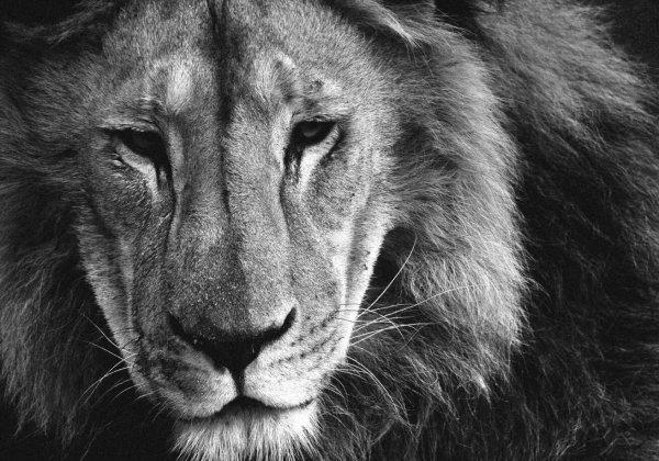 Vraag Zuid-Afrika en Zimbabwe om de trofeejacht te stoppen