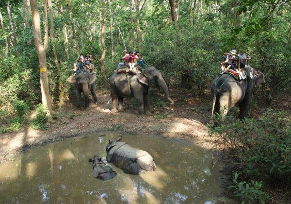 Filmmaker en fotograaf Jack Harries onthult de toeristische valkuilen die dieren mishandelen