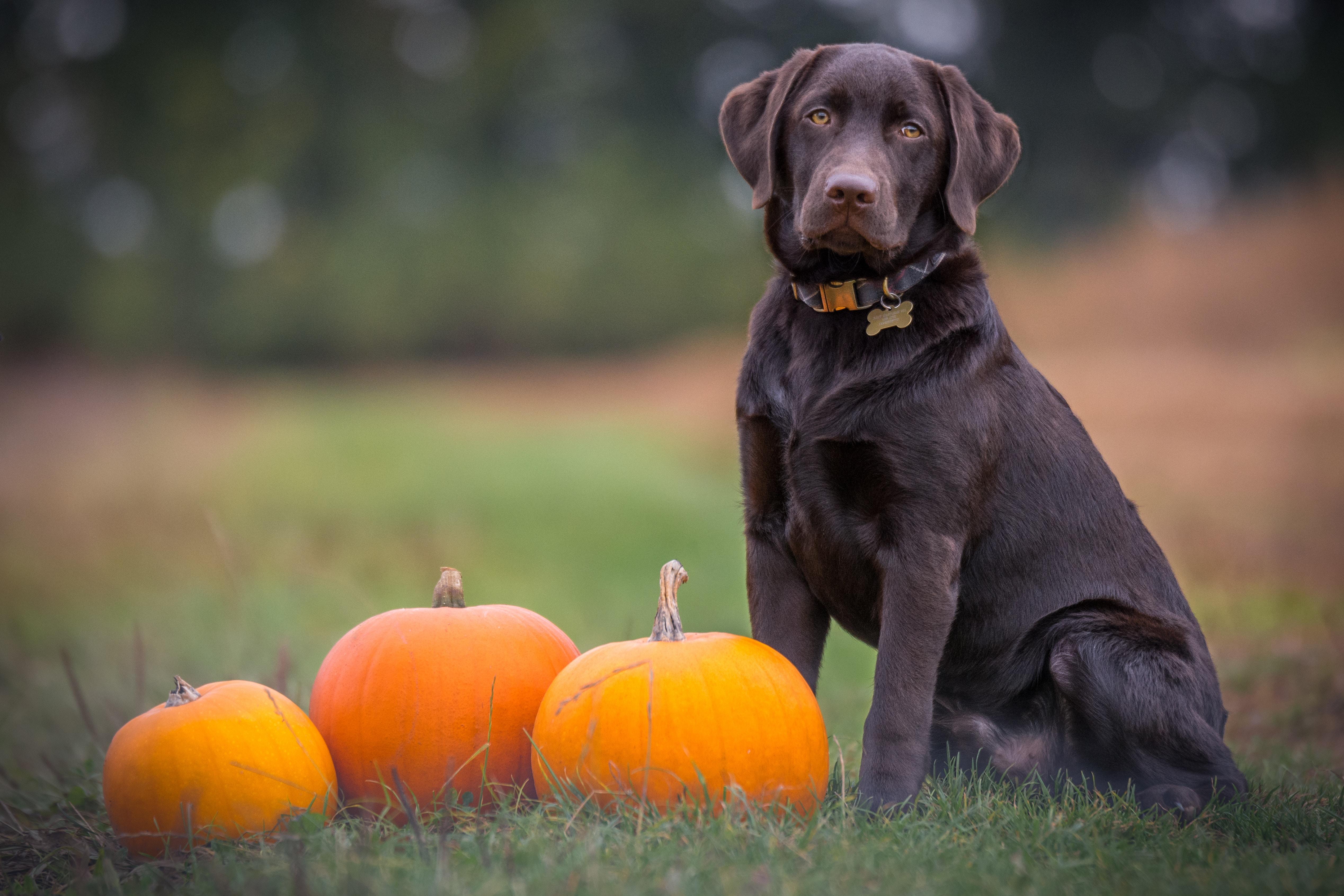 PETA's 4-stappenplan om dieren te beschermen tijdens herfstfeestdagen zoals Halloween