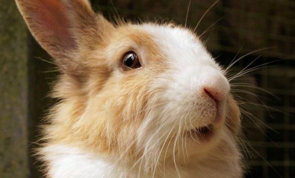 OVERWINNING: Honderden dieren gered nadat beroepsuitspraak overeenstemt met het PETA International Science Consortium
