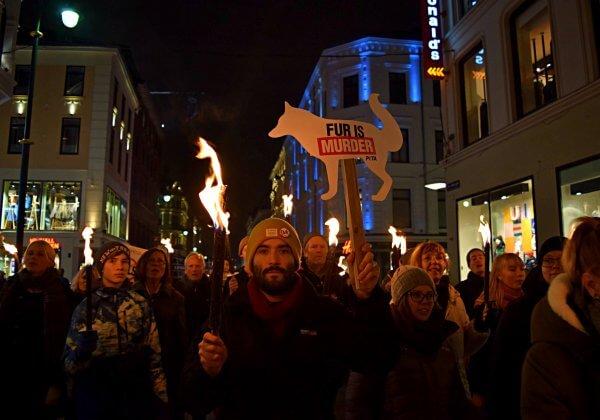 Geweldig nieuws: Noorwegen verbiedt pelsdierfokkerijen!