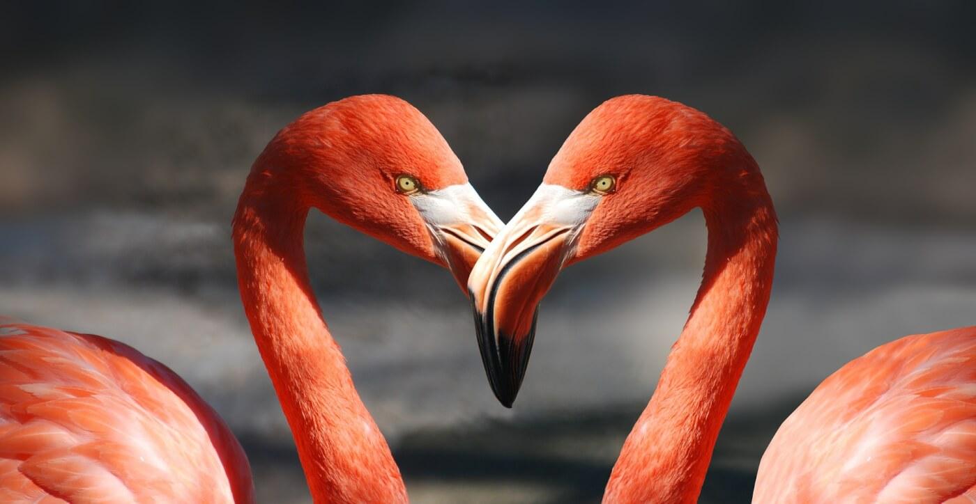 Help dieren door op Valentijnsdag 'de grote vraag te stellen' – en meer!