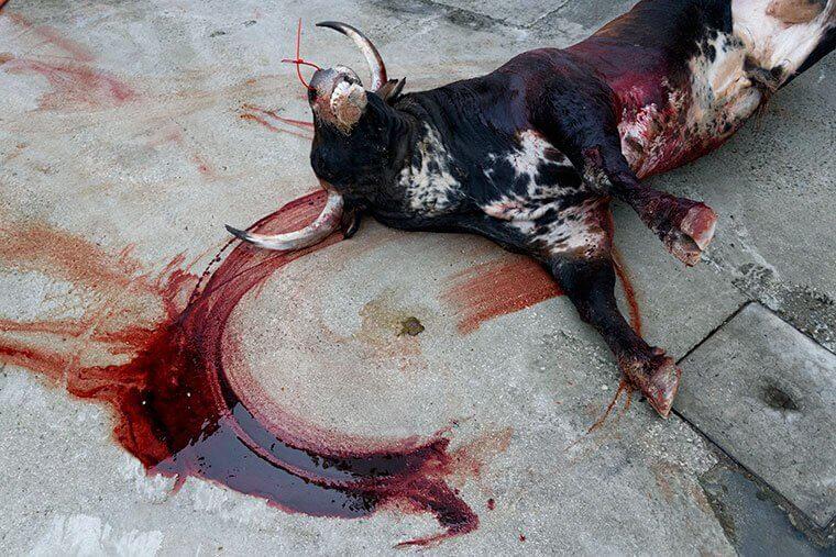 FOTO'S: Wat er echt met stieren gebeurt tijdens het jaarlijkse San Fermin-festival