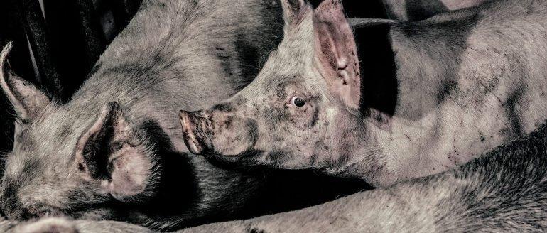 7 redenen om geen vlees te eten