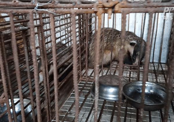 Angstaanjagende beelden laten de harde realiteit zien van dassen die worden gedood voor make-upborstels