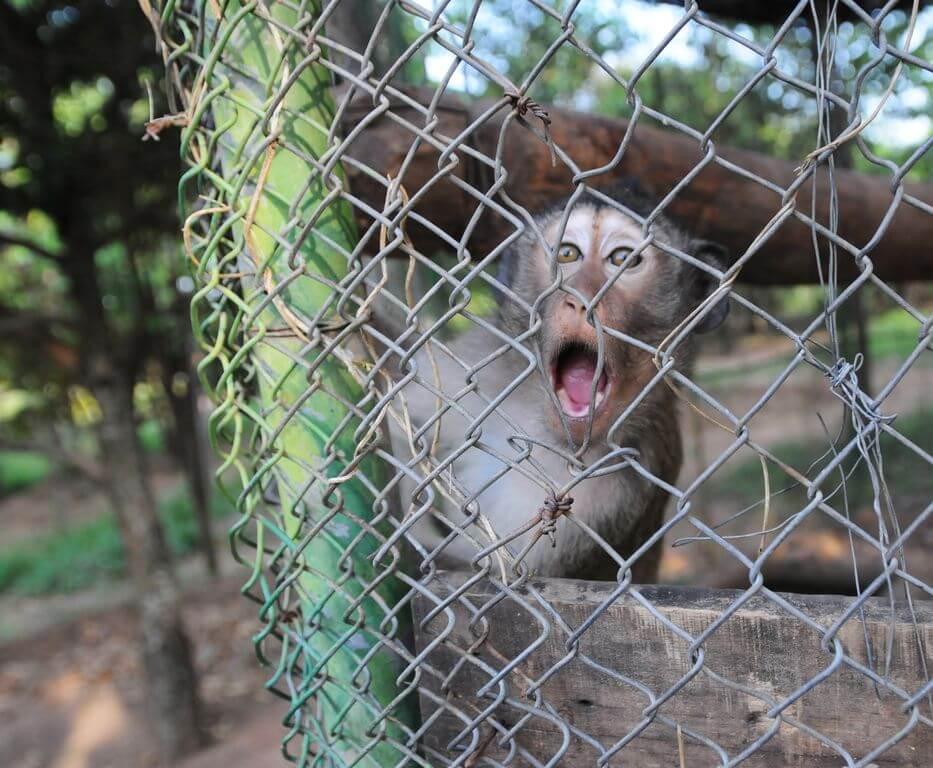 Lijden in gevangenschap: opgesloten dieren tentoongesteld in winkelcentrum in Oekraïne